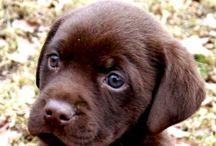 Puppy's / Cute