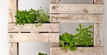 Diy's outdoors / wood and plants. a lot of projects from pallets in garden, outdoors.