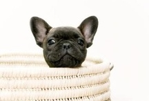 Doggie / *lovely photos of dogs (no babies/pugs here though; there's a board for that!)* / by Lexy