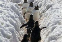 Snow scenes / by Kathy M. Storrie/writer/author/pinner