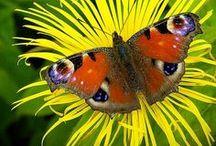 Butterflies / Moths/ Catepillars / Find the fake butterflies. / by Kathy M. Storrie/writer/author/pinner