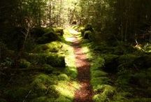 Roads / Paths / Steps / Decks / by Kathy M. Storrie/writer/author/pinner