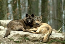Ⓑorn to be Ⓦild / My favorite wild creatures of the woodlands / by Cori