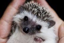soo cute!!!!