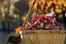Herfstplezier! / Genieten van de Herfst!  Herfst-stukjes maken. Herfst-wandelen-fietsen. Fotograferen van landschappen-bomen-dieren-vogels en nog veel meer alles in het kader van de Herfst!