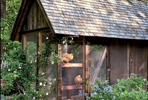 Chickens and Chicken Stuff / by eclectic cottage