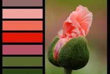color schemes / Colorhunter by designdrOops