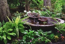 Shade Garden / by eclectic cottage