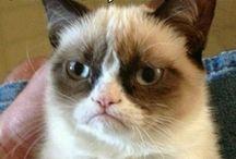 Grumpy Cat makes me laugh
