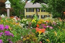 Wildflower Garden / Thinking of adding a wildflower garden bed, so I needed some inspirations! / by eclectic cottage