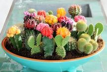 Plants inside/outside
