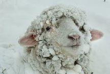 Merino Wool / It's all about the merino!