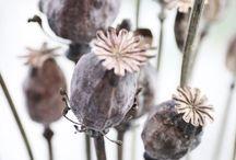 INSPIRATION Autumn flowers