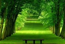 alberi...