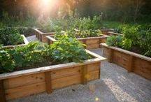 Gardening: Permaculture