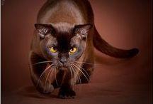 Cats  / Kočky - fotky, keramika, fimo a jiné materiály.