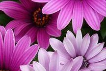 Květiny     (Flowers)