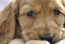 Cuccioli - Puppies