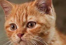 Gattini - Kittens