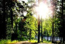 Rokua / Der Rokua Geopark ist der nördlichste Geopark der Welt und ein finnisches eiszeitliches Naturerbe. Der Geopark schließt den Nationalpark Rokua mit seinen einzigartigen geologischen Formen und der besonderen Kultur ein.