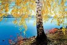 Saimaa Region: Imatra / Die am Saimaa-See gelegene Stadt Imatra im Südosten Finnlands ist eine üppig blühende Gartengemeinde in der Nähe der russischen Grenze. Berühmt wurde Imatra vor allem durch Finnlands bekannteste und älteste Natursehenswürdigkeit, die Imatrankoski Stromschnellen.