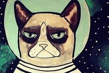 grumpy cat 》
