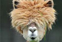Hair fun / Vita da #parrucchiere, umorismo da parrucchiere...e tutto quello che ci fa ridere!  #beauty #hairstyle