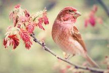 Birds ❊ / ❊