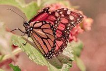 Butterflies ❊ / ❊
