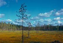 Taivalkoski / Rund 800 km nordöstlich der Hauptstadt Helsinki liegt die Hügellandschaft im Nordosten des Landes. Die knapp 4.500 Einwohner der Region genießen ihr Leben in der weiten Natur.