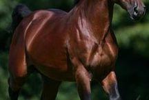 LOVELY  HORSE