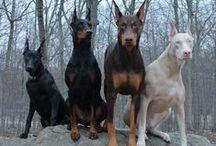 Terrestial animals