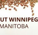 About Winnipeg, Manitoba / Aschenti Cocoa is located in Winnipeg. Check things that you can do here.