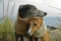 Greyhound Love / This board is for my son and daughter in law.  They are very active in saving greyhounds from the race tracks in FL.  I am so proud of them. / by Phyllis Shively