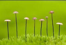 sientä