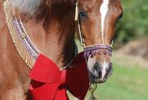 Arabian Horses For Sale / Straight Egyptian Arabian and Arabian Horses For Sale