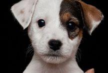 Puppies /  perro