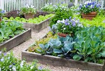 Organic Gardening / Organic tips to garden in small or urban spaces (vegetables or flowers), and lots of inspiration.