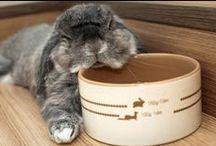 Kaniner, kaniner, kaniner