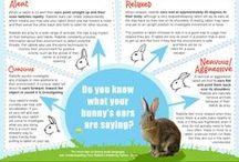 Kaninvelfærd