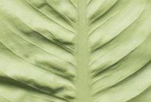 Reversed Volumes Leaves