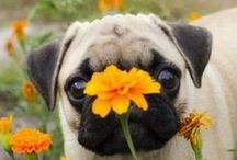 I love little Puggy Wuggies!!!