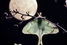 Night Flowers, Moths and the Moon