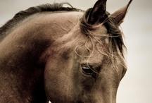 Echte Pferde (Real horses)