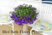 Gardening Tips & Ideas / Home gardening tips and ideas for the DIY gardener
