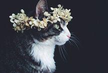Cat / 猫