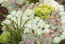 Succulent obsession  / Gardening  / by Karin Teresinski