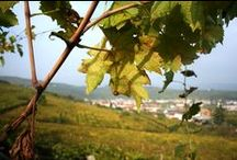 Fall.. in love with Nature / Amazing pictures from our vineyards during this fall
