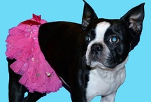 Dog Tutus / This is a collection of dog & puppy tutus.  Many more items can be found at www.fetchdogfashions.com   #puppy #dog #dogclothing #dogfashion #fashion #design #designer #smallbusiness #entrepreneur #smalldogs #tutus #dogtutus #dogsintutus