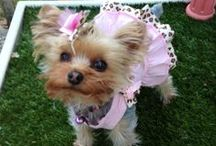 Dog Dresses / This is a collection of dog & puppy clothing dresses, & tutus.  Many more items can be found at www.fetchdogfashions.com   #puppy #dog #dogclothing #dogfashion #fashion #design #designer #smallbusiness #entrepreneur #smalldogs
